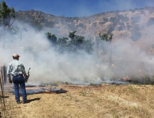 Podcast: Prescribed burns and wildfire in Santa Cruz County