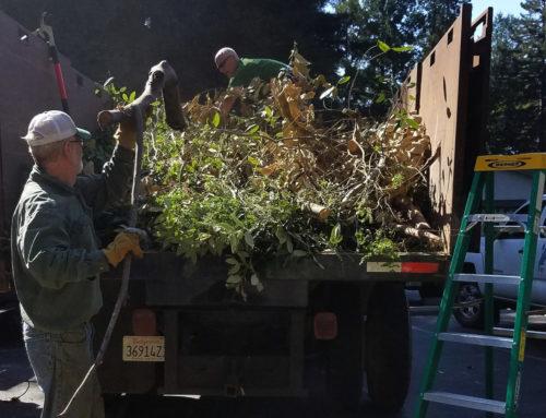 Wildfire preparation groups double in Santa Cruz County